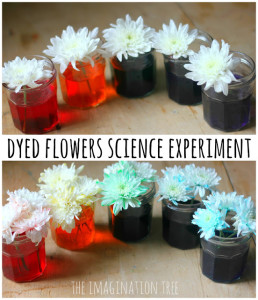 Macro Photography How To Guide - Dyed Flowers