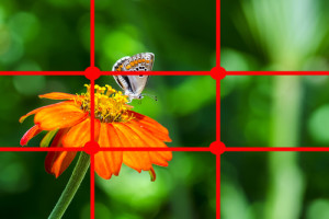 Macro Photography How To Composition
