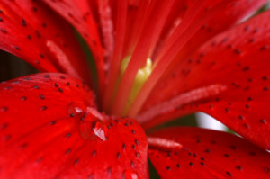 About Macro Photography Subjects - Parts Of A Flower
