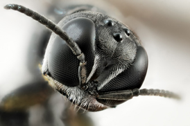 macro photography insect's compound eyes