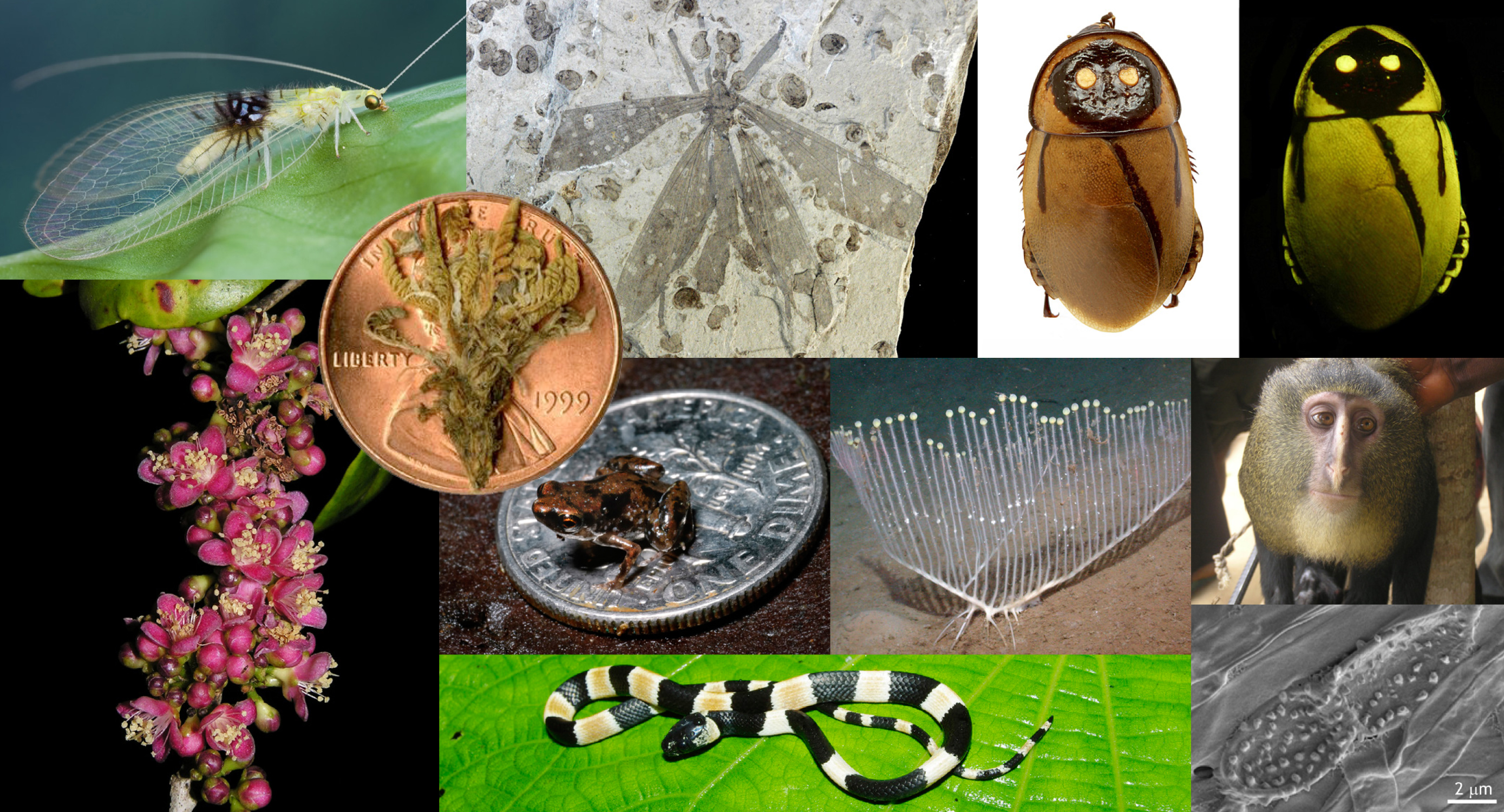 Top 10 new discovered species for 2012
