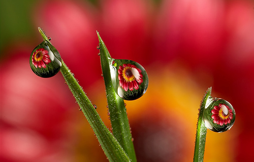 LordV's Dew Drop Photography Photo
