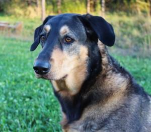 Gus, the macro photographer's companion