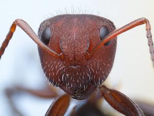 macro photography ant