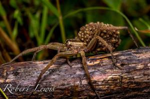 macro photography spider 1