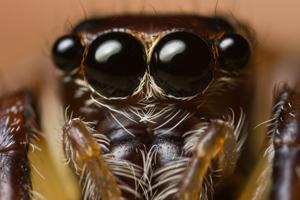 macrophotography2