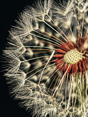 macro photography - photoshop tips for beginners