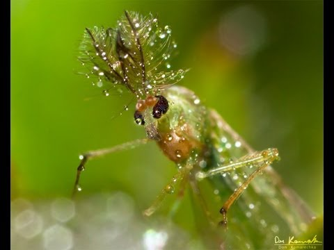 Improving your Outdoor Macro Photography Skills
