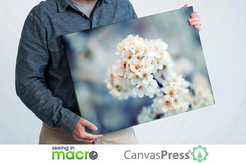 CanvasPress SeeingInMacro Giveaway