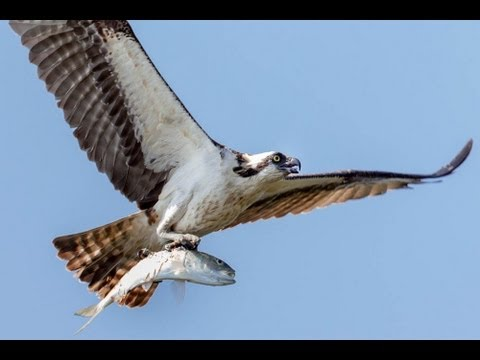 How to Photograph Birds In Flight Tutorial